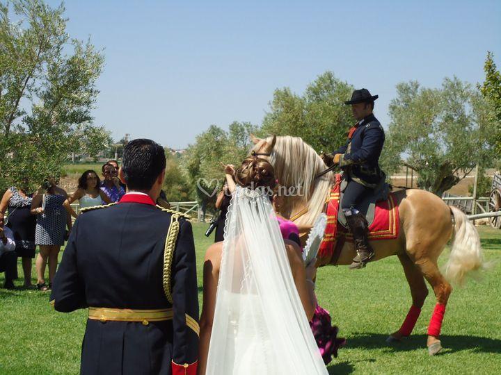 Espectáculo a caballo