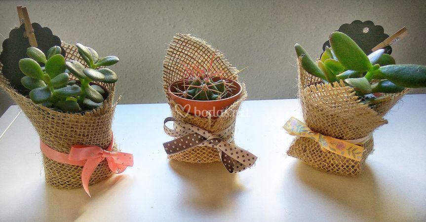 Plantas suculentas y cactus