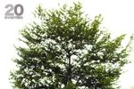 Decoración árbol