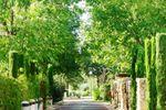 El Olivar jardines