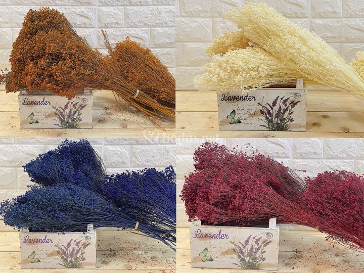 Ramos de broom natural