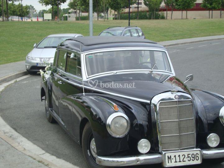 Mercedes Arenauer