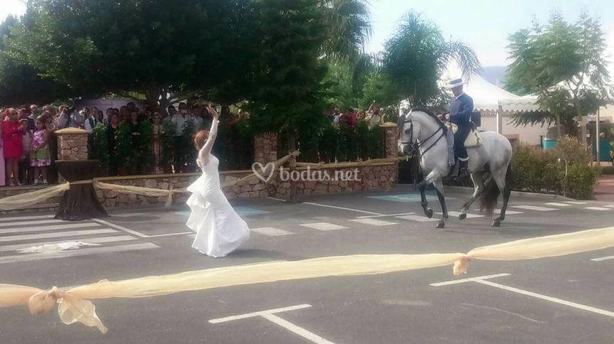 Danza ecuestre con novia