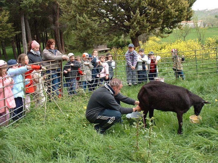Se pueden realizar múltiples actividades, como ganadería