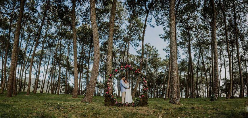 El Bosque Secreto by Finca El Cabildo