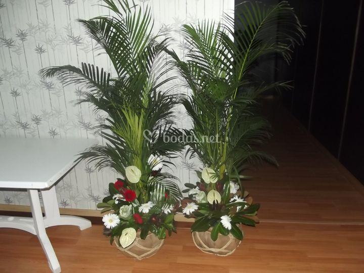 Decoracion flores, plantas