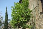 C�ctel en los jardines de Masia Museu Serra