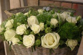Herbas e Flores