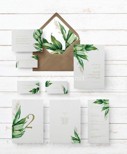 Colección botánica acanto
