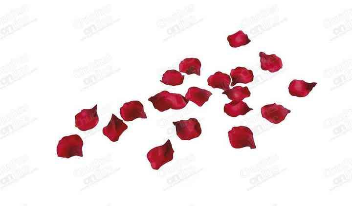 Cañón de confetti pétalos