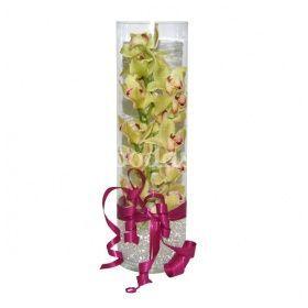 Orquídea con tubo de cristal