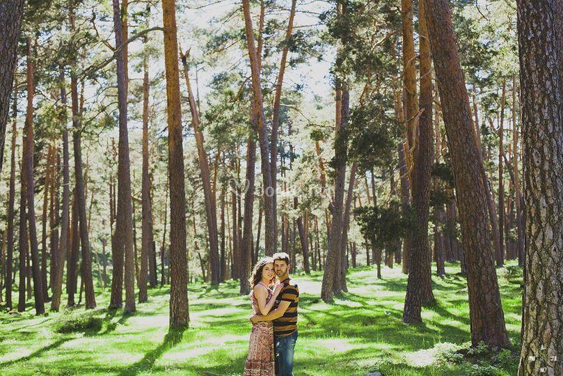 Preboda entre pinos