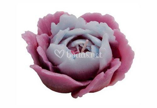 Rosa Afrodita bicolor