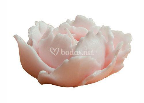 Rosa Afrodita rosa palo