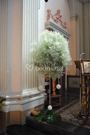 Árbol de paniculata