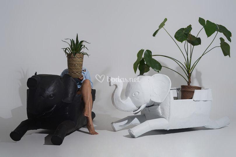Elefantes Container