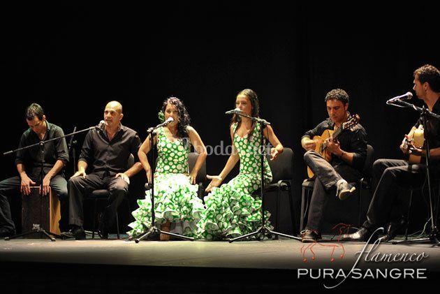 Formación flamenca