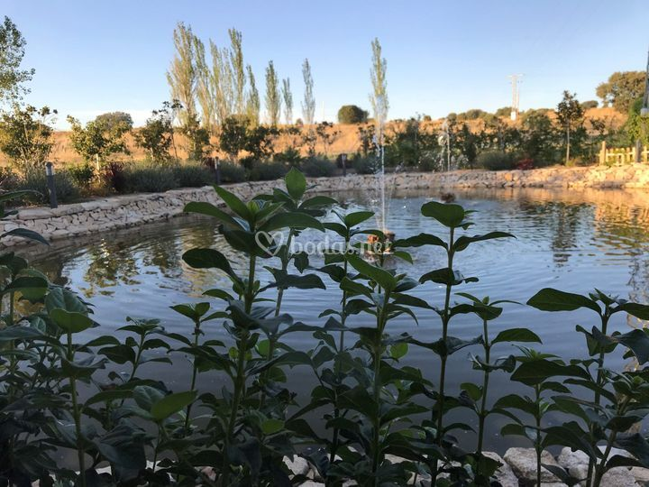 Vista lago jardines