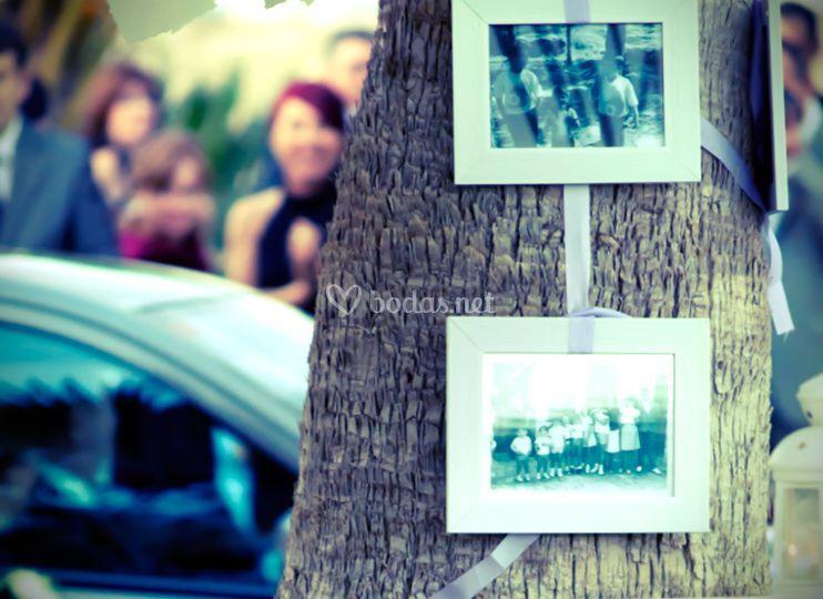 Detalles finca en el árbol