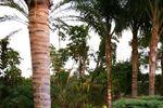 Oasis Jardines de Azahar