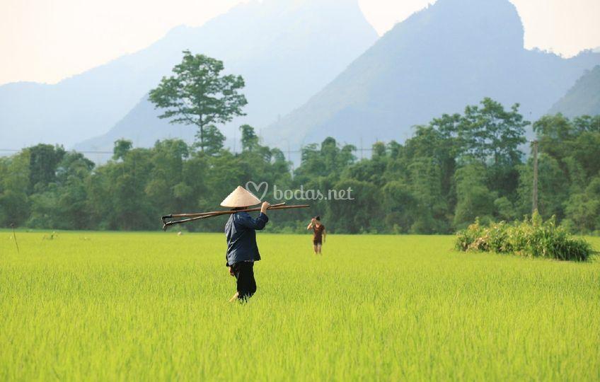 Vietnam idílica
