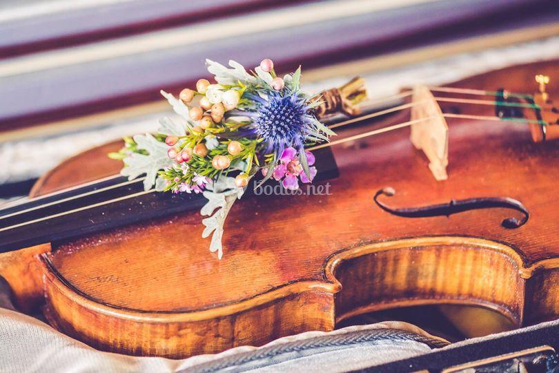 Prendido sobre violin