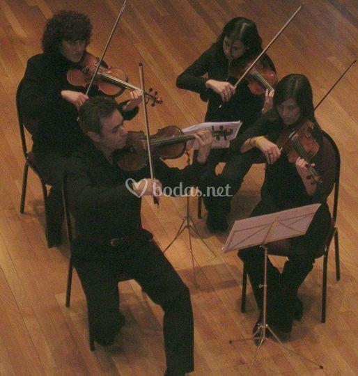 4 violines en torrevieja