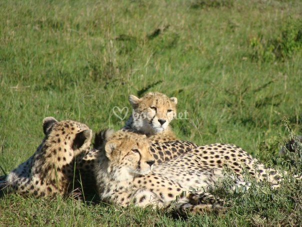 Safari de lujo en Africa
