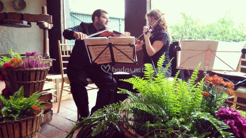 Violines boda