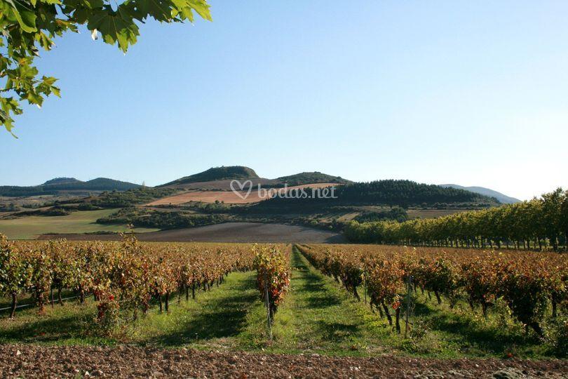 Entre viñedos, en Bodega Otazu