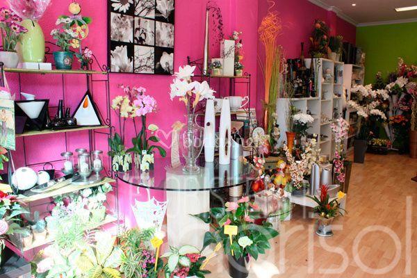 Plantas y flores de calidad