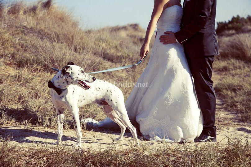 Mascota en boda