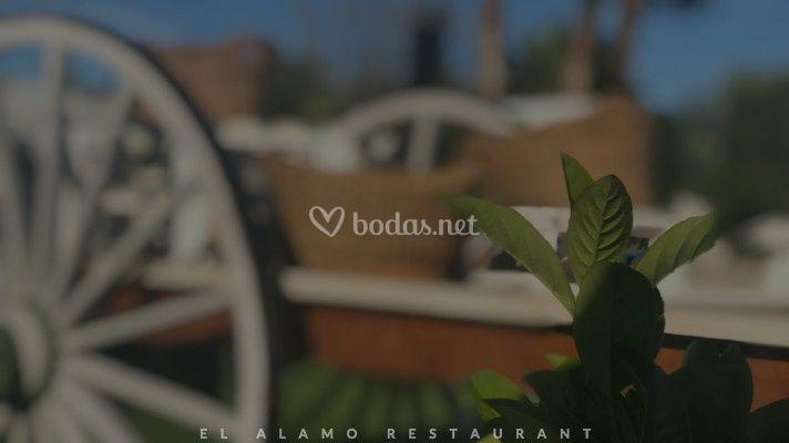 Jardines El Alamo