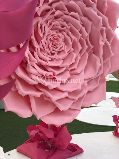 Rosa gigante