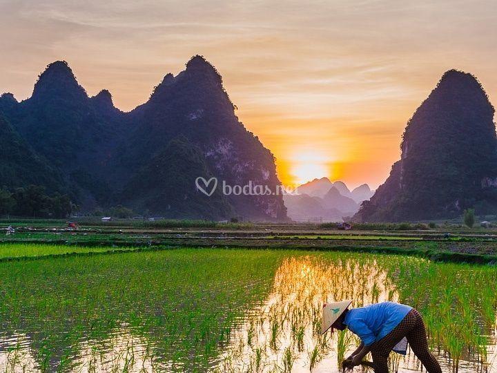 Vietnam eterna sonrisa