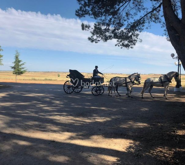 Carruaje de caballos