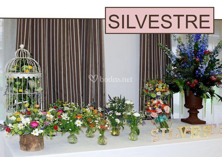 Navarro Collection Silvestre