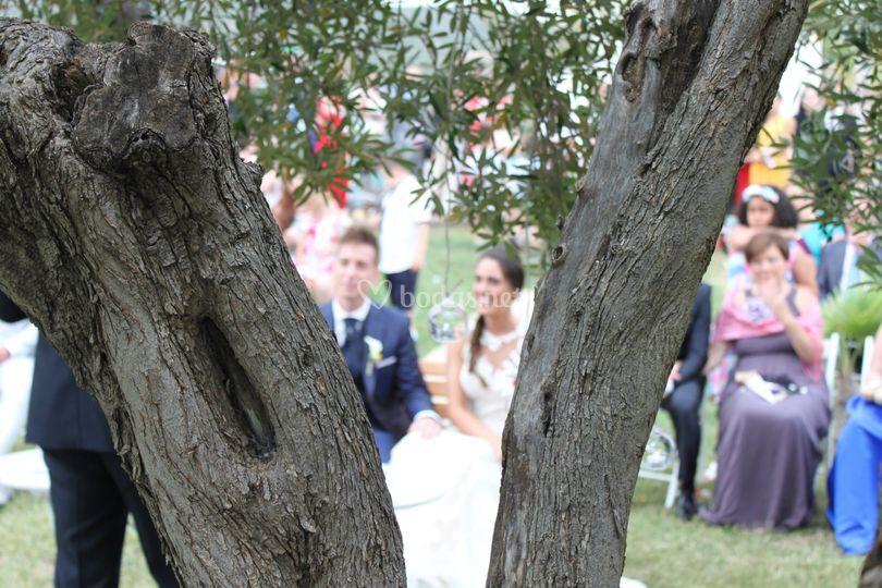 Ceremonia en el olivo