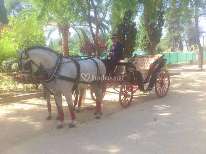 Coche de caballos Mirlor