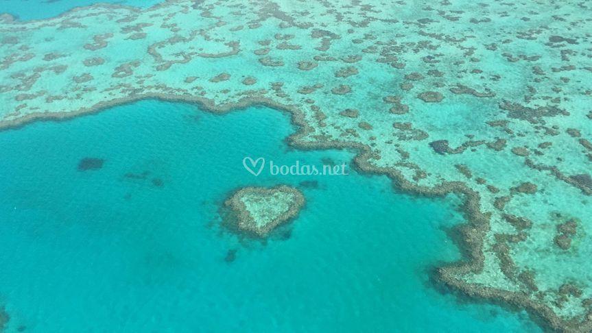 Barrera de Coral- Hamilton