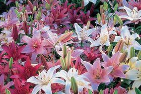 Anturios y más flores