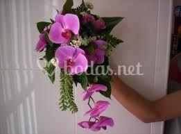 Cascada con orquídea