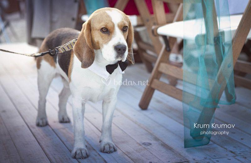 Krum Krumov Photography