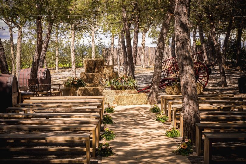 Cerimònia al bosquet