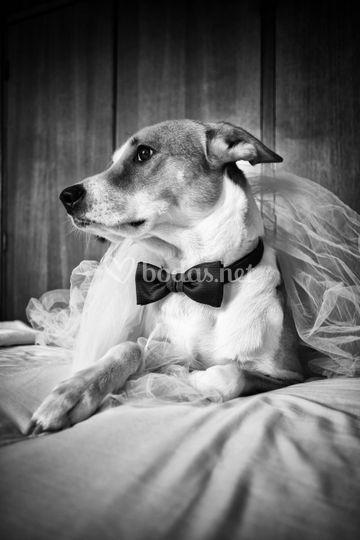 Mascotas de boda
