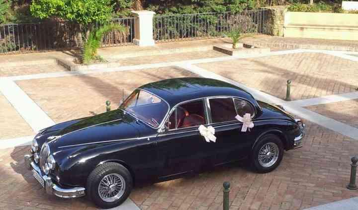 Lateral Jaguar