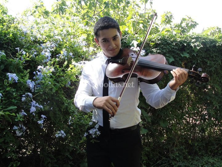 Viola David