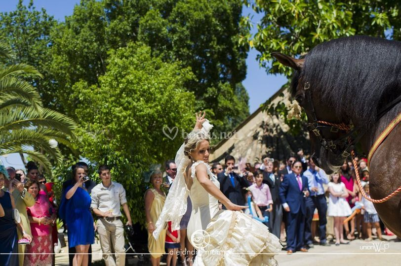 Novia bailando con caballo