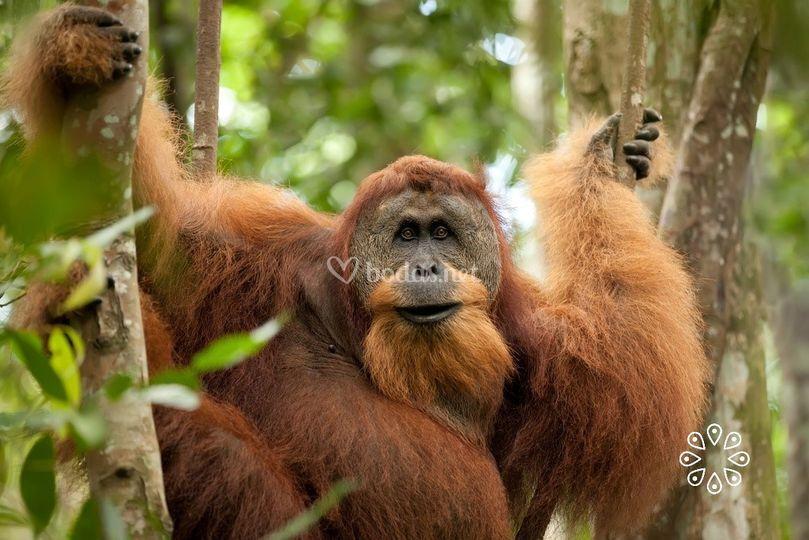 Treking en Sumatra, Indonesia