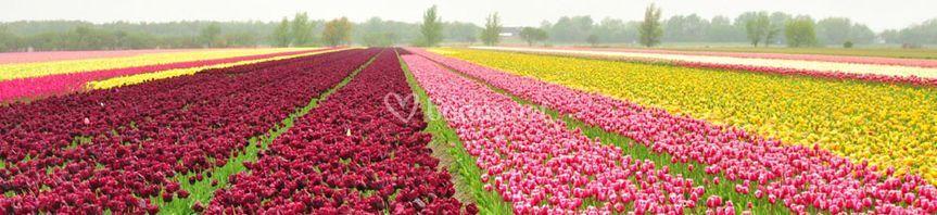 Holanda en abril